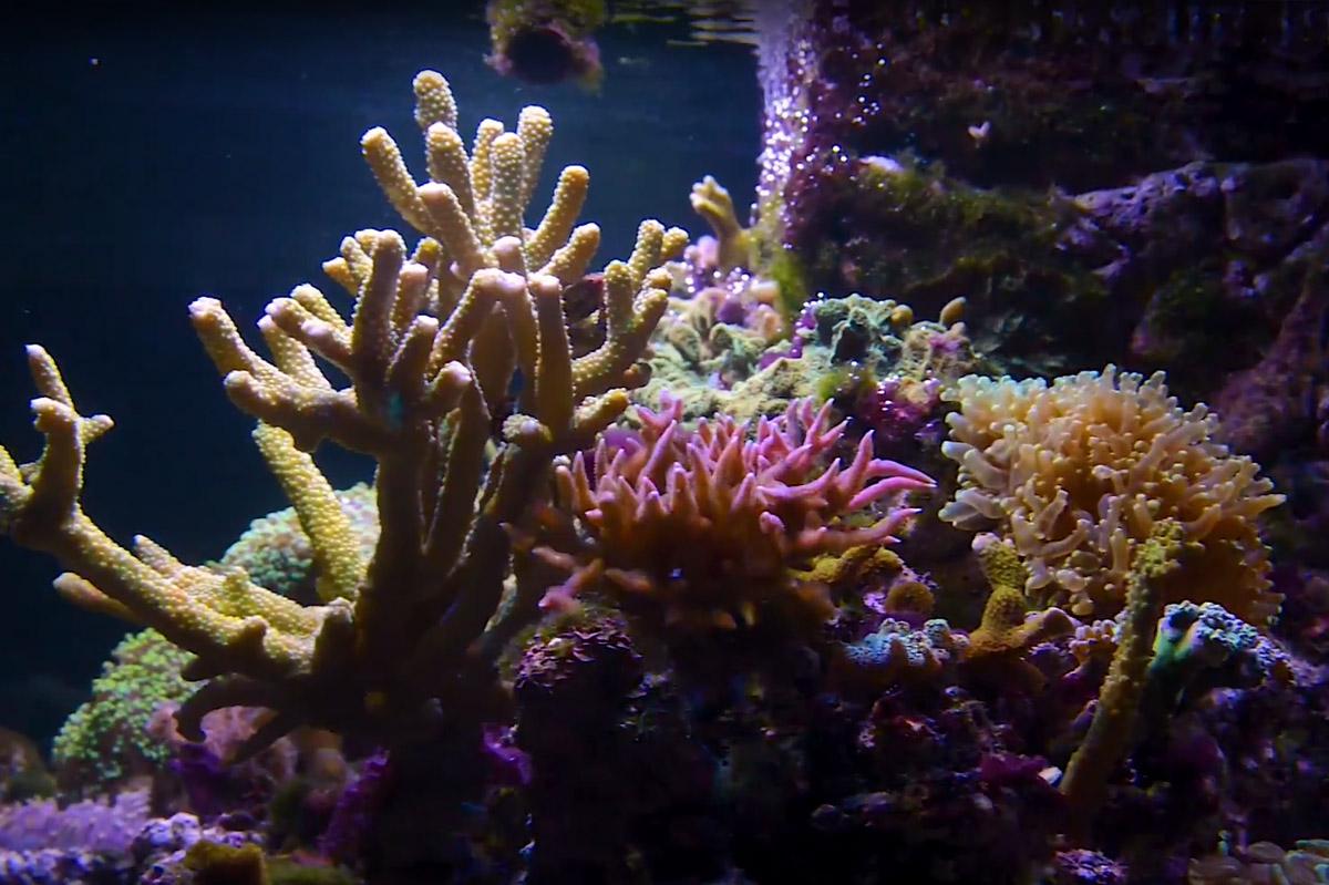 Korály 8 druhů 2 část
