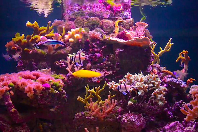 Výroční akvárium Korálů